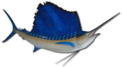 Mounted sailfish.